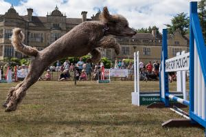 https://stokesaycourt.com/assets/gallery/events-74/ludlow-fun-dog-day-2018-91/192-display-jumps-dog-displays18-0-3-_thumb.jpg